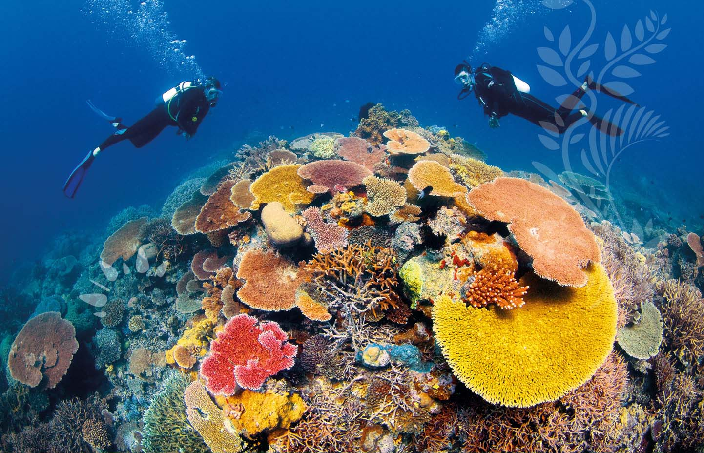 http://www.prasannaholidays.com/wp-content/uploads/2014/05/diving_experience-cairns_great_barrier_reef.jpg