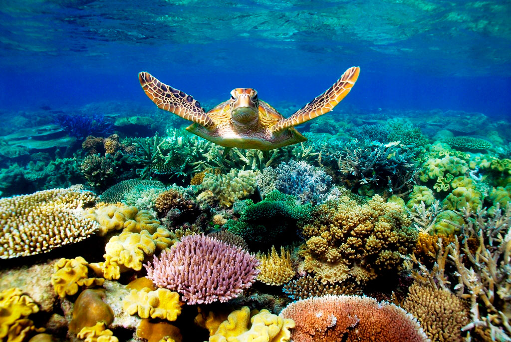 http://www.prasannaholidays.com/wp-content/uploads/2014/06/Cairns-Great-Barrier-Reef.jpg