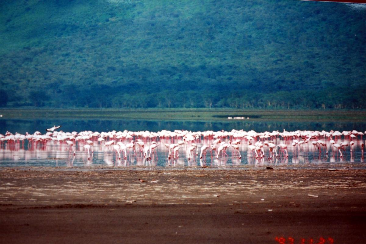http://www.prasannaholidays.com/wp-content/uploads/2014/06/Flamingos_at_lake_Nakuru.jpg