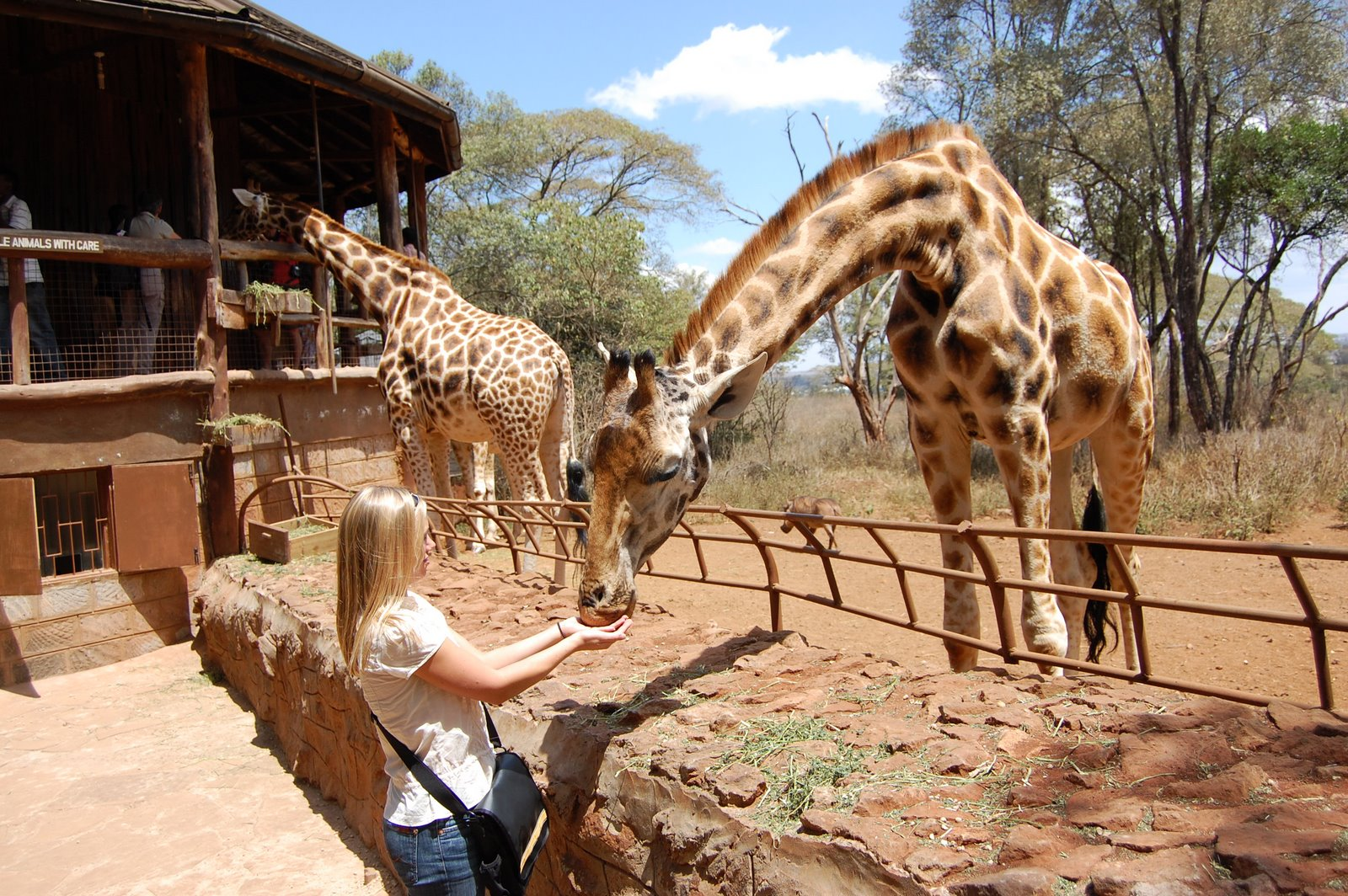 http://www.prasannaholidays.com/wp-content/uploads/2014/06/Giraffe-Center-Nairobi.jpg