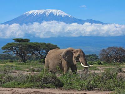 kilimanjaro-elephant