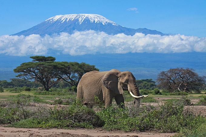 http://www.prasannaholidays.com/wp-content/uploads/2014/06/kilimanjaro-elephant.jpg