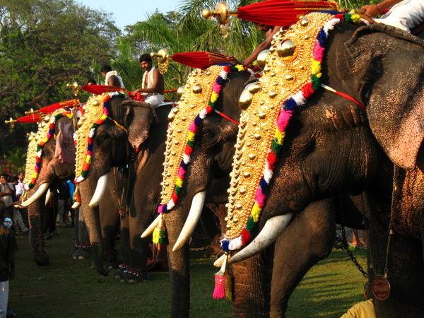 http://www.prasannaholidays.com/wp-content/uploads/2015/10/72e4a7e6a26d3ae4c7f41eea107676d5-elephant-bath-asian-elephant1.jpg