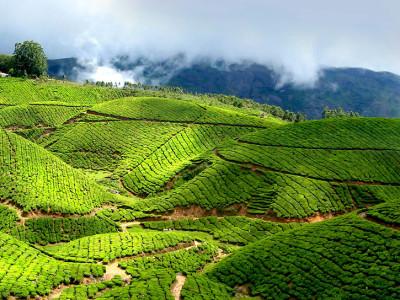 Kerala_Munnar_02
