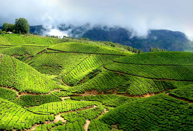http://www.prasannaholidays.com/wp-content/uploads/2015/10/Kerala_Munnar_021.jpg